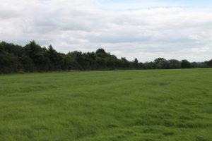 Ox House Farm (4)